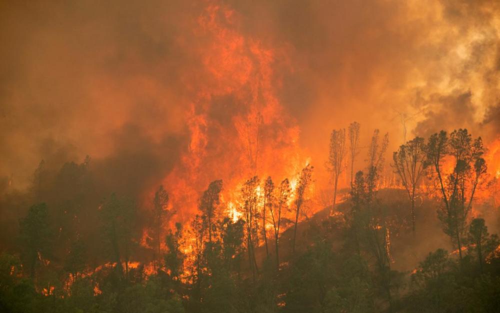全球氣候異變 美西嚴重野火