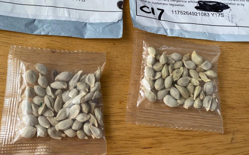 德州居民收到來自中國「神秘種子」,官方呼籲不要種!