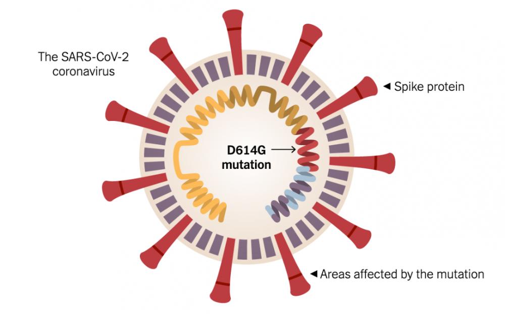 研究表明,新冠病毒基因突变更易感染人体细胞